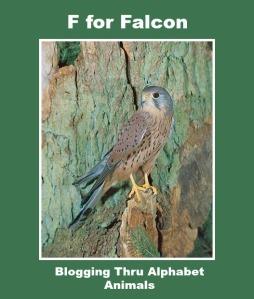 falconfinal