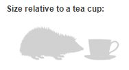 Hedgehog Teacup