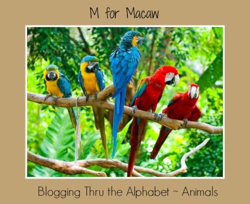 macaw2